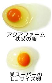 アクアファームの卵