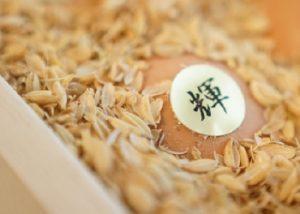 アクアファーム秩父の卵